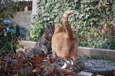 Katzen- oder Verhaltenspsychologie sich begrüßende Katzen Siri und Nele