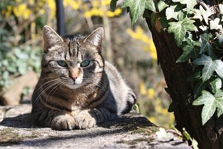 Katze abgestimmter Beratungsablauf