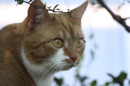 Katzen- oder Verhaltenspsychologie aufmerksame Katze Nele