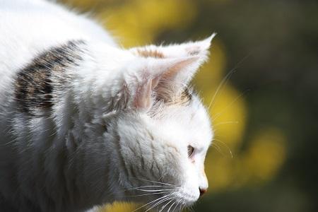 Katzen- oder Verhaltenspsychologie lauernde Katze Pauline