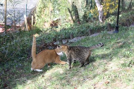 Katzen- oder Verhaltenspsychologie spielende Katzen